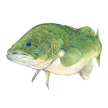 AFN Murray COD Sticker