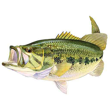 AFN Large Mouth Bass USA Sticker