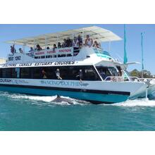 1 Hour Dolphin & Scenic Canal Cruise