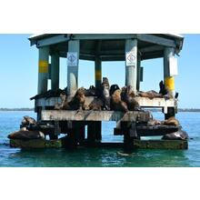 15hr Dolphin and Seal Eco Adventure Cruise